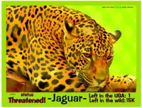 """The Jaguar USA postcard, a Threatened Animal alert by """"To Save The Planet"""""""