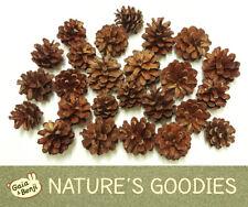Organic UK Wood Pine Cone Pet Chew Toy Mouse Hedgehog Chinchilla Mice Rabbit