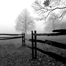 CANVAS ART PRINT Fence in the Mist Harold Silverman Photograph Trees Fence 24x24