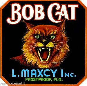 Frostproof Florida Bob Cat Orange Citrus Fruit Crate Box Label Art Print