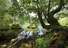 Fototapete Tapete Wandbild F00360 Vlies Teich versteckt im Wald Natur Wald Bäume