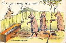 Standing Pigs Fenced Yard Eating Scene Antique Postcard K19189
