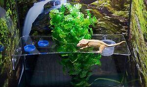 Reptile Acrylic Full Length Feeding Ledge with Cutout.