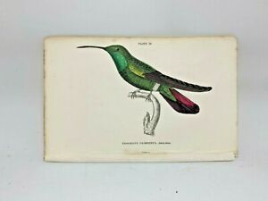 1st Ed Hand-colored Jardine's Natural History 1834 - Gramine Hummingbird - 32 34