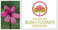 FIORI AUSTRALIANI Dog Rose of the Wild Forces PERDERE CONTROLLO BUSH FLOWER