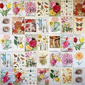 Cottage Core Wall Collage Kit Art Vintage Flower Nature - 24 x A4 prints