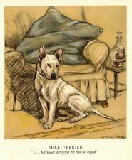 1947 Antique Bull Terrier Print Vernon Stokes Bull Terrier Dog Art 4191e