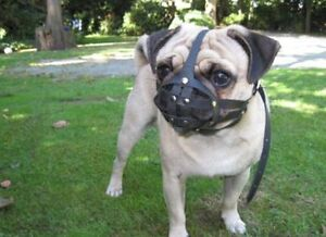 Light leather Dog Muzzle for Pug and other flat face faced short snout dog's .