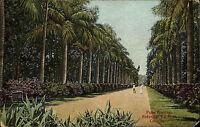 Kalkutta Calcutta India AK ~1910 Palm Avenue Botanical Garden n/ Mittelnkirchen