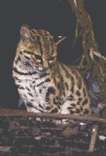 BN original cross stitch  chart of a  Margay wild South American cat