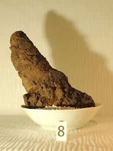 Lava rock for Aquascaping (from Auvergne - FRANCE) - 20x10 cm - 587g