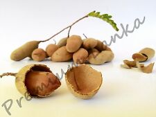100+ Seeds Sweet Tamarind Tropical Fruits Seeds BONSAI NO GMO Tamarindus indica