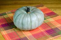 Squash Winter Sweet Meat Non GMO Heirloom Garden Vegetable Seeds Sow No GMO® USA
