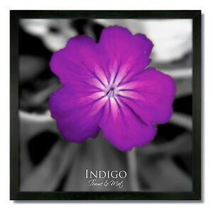 Set of 6 - 10x10 Square Black Wood Picture Frames and Clear Glass