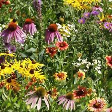500 pcs Wildflower 'Perennial flowers Mixed' flower seeds #W03