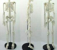 Medical Standard Anatomy Human Body Mannequin Skeleton Structures Medical Models