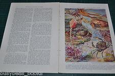 1936 magazine article, SEA CREATURES OF OUR ATLANTIC SHORES, color art