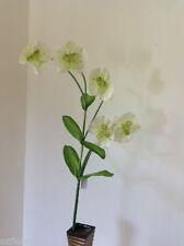 Orchid Décor