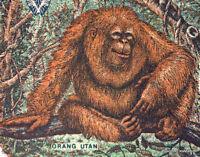 INDONESIE billet neuf de 500 RUPIAH Pick128g ORANG OUTANG  1994