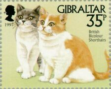 Gibraltar -1997- BiColored British Shorthair (Felis silvestris catus) Mnh Stamp