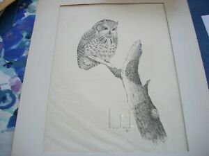 1972 Douglas Howland Signed Pen & Ink Drawing Perched  Screech Owl