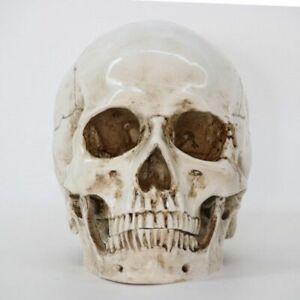 Statues Sculptures Resin Halloween Home Decor Decorative Craft Skull Size 1:1