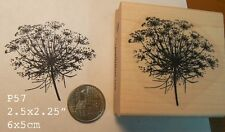 Queen Ann's Lace flower rubber stamp P57