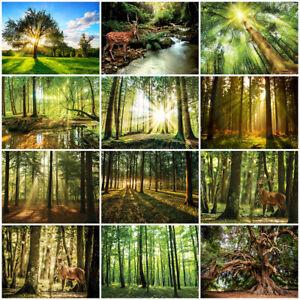 Tapete WALD 3D Fototapete Vlies Natur Sonne Hirsch Grün Bäume Wohnzimmer MIX016