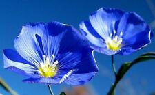 Blue Flax Seeds, Heirloom Wildflowers, Blue Flower Seeds, Bulk Flower Seed 400ct