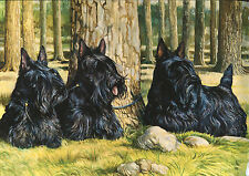 """SCOTTISH TERRIER SCOTTIE DOG ART LIMITED EDITION PRINT - """"3 Dogs In the Forest"""""""