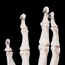 Hand Joint Anatomical Skeleton Model Human Medical Anatomy Study Tool Life r