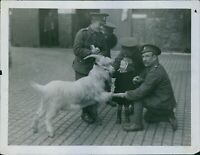 Taffy, the mascot goat of the London Welsh, makes a new friend, WW I. - 8x10 pho