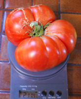 Tomate delicious  gigante -  record guinness peso 3.51kg  25 semillas - seeds