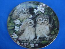 Danbury Mint Little Owls Collectible Baby Owls Plate #B780 Dick Twinney & Coa