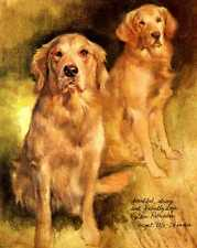 ** Golden Retriever - Vintage Dog Print - Poortvliet