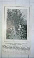 1905 Photographic Apparatus Used In Photographing Nesting Birds At Close Quarter