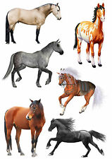 6  ADESIVI FINESTRA CAVALLI WINDOWS STICKERS VETRI HORSES CAVALLO RAMPANTE