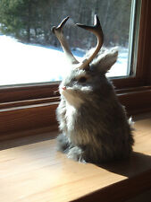 JACKALOPE RABBIT Fake Fur FURRY ANIMAL TAXIDERMY REPLICA 1800g FREE SHIPPING USA