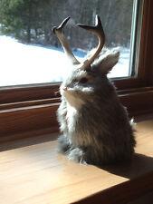 JACKALOPE RABBIT Fake Fur FURRY ANIMAL TAXIDERMY REPLICA 1800g FREE SHIPPING USA
