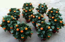 Remote Control 20 Blooming Oranges,Stage Magic,Magic Trick,Comedy,Wedding Show