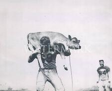 Clyde Bulldog Turner Carries Cow 8x10 Press Photo Chicago Bears Football