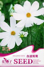 Original Package 50 White Common Cosmos Seeds Cosmos Bipinnatus Flowers A178