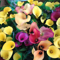 200PCS New Colorful Calla Lily Flower Seeds Home Garden Plants Seed DIY Bonsai