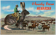 Howdy from Nebraska! Punching Cattle on a Jack Rabbit - Exaggeration Postcard
