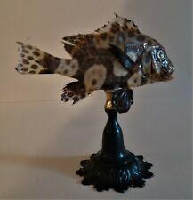 Cabinet de Curiosités poisson naturalisé plectorhinchus chaetodonoides sur socle