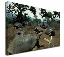 More details for galapagos tortoise x-large 30