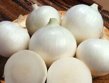 (Long day) White Sweet Spanish onion 250 seeds * NON GMO * ez grow * CombSH I23