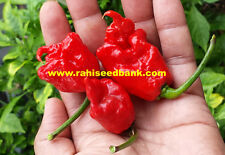 Carolina Reaper + Butch T Cross Chilli - 10 Australian Grown Seeds!