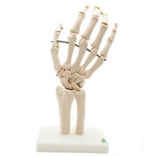 PVC Plastic Human Hand Skeleton Model Used For Medical Anatomical Study