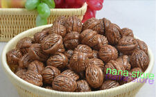 20PC Artificial Walnut faux fruit fake food house faux decor Sketching tool new